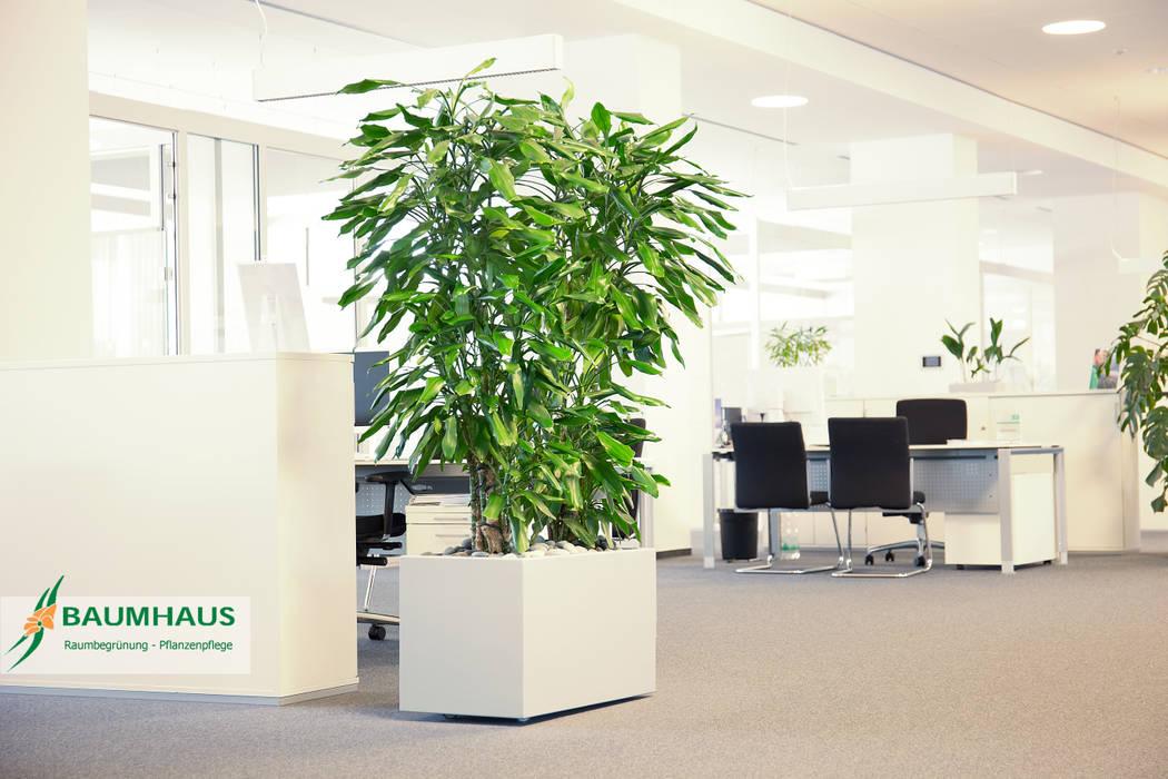 Pflanzen Der Ideale Raumteiler Geschaftsraume Stores Von