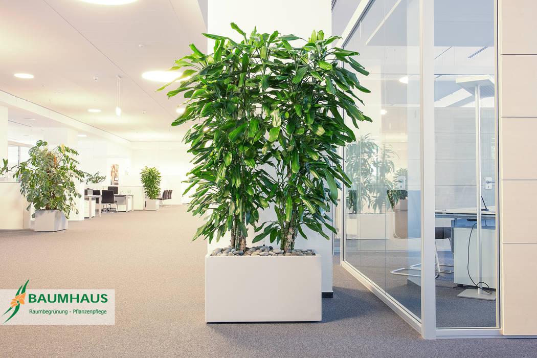 Pflanzen Der Ideale Raumteiler Veranstaltungsorte Von Baumhaus