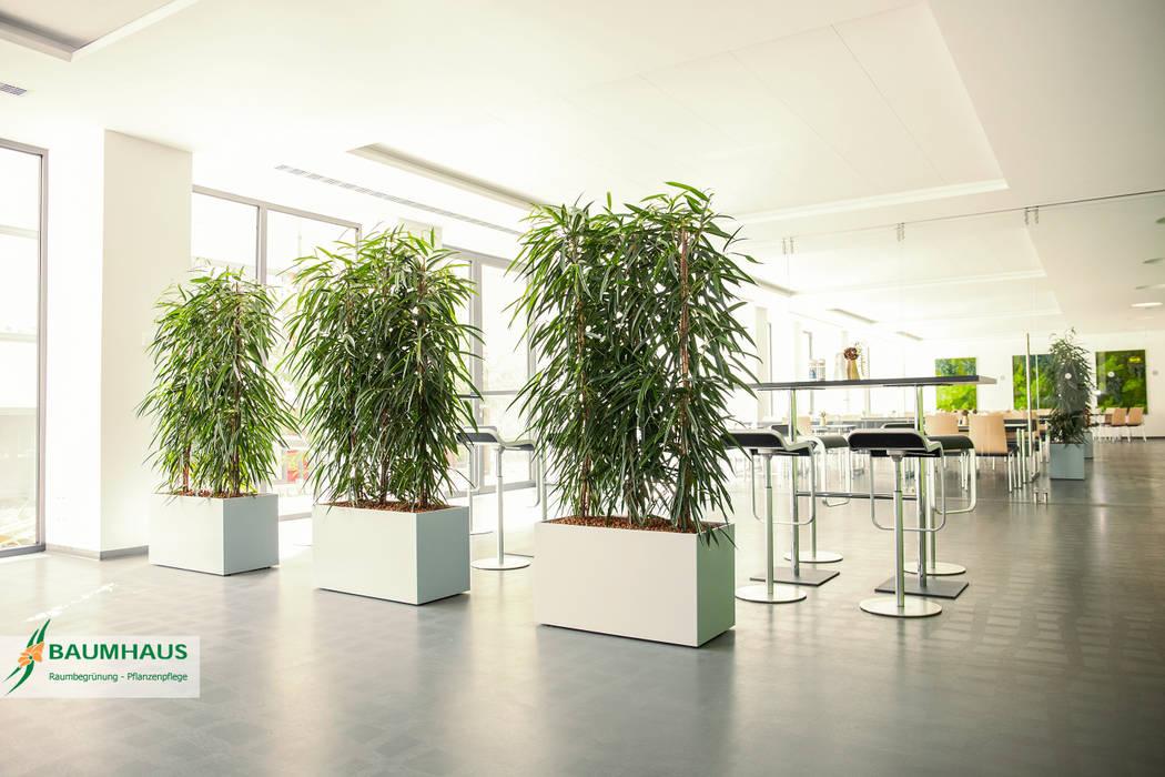 Pflanzen - der ideale Raumteiler Moderne Krankenhäuser von BAUMHAUS GmbH Raumbegrünung Pflanzenpflege Modern