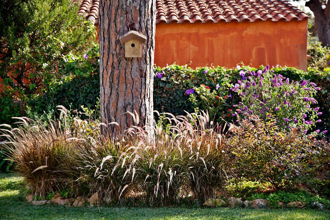 Gramíneas,Pennisetum setaceum 'Rubrum' : Jardins  por Maria Mayer | Interior & Landscape Design,