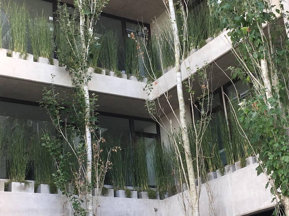 Vegetación en el aire: Jardines de estilo moderno por Vivero Antoniucci S.A.