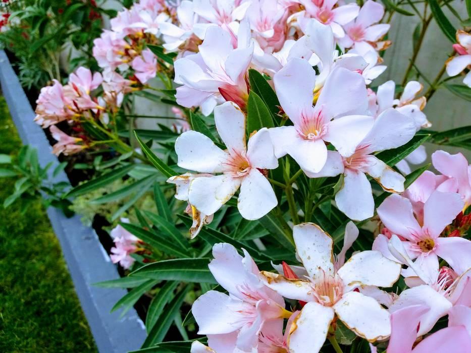 Detalle de sector de macizos : Jardines de estilo  por Deck and Garden