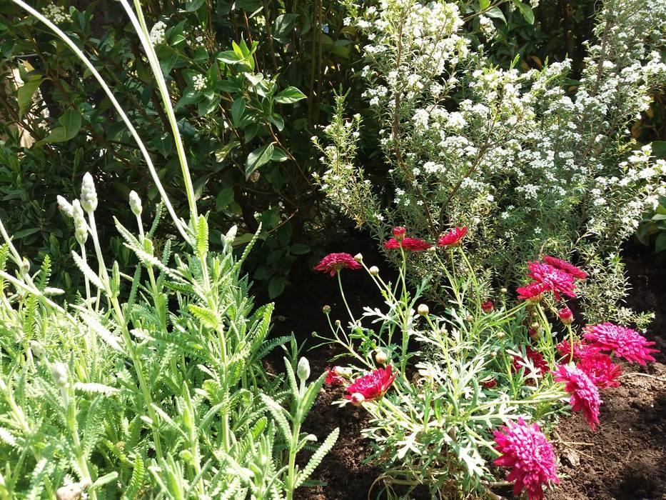 Detalle de Flores en macizo: Antejardines de estilo  por Deck and Garden