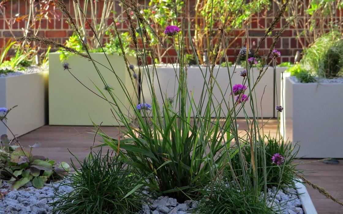 Native planting:  Roof by MyLandscapes Garden Design, Modern