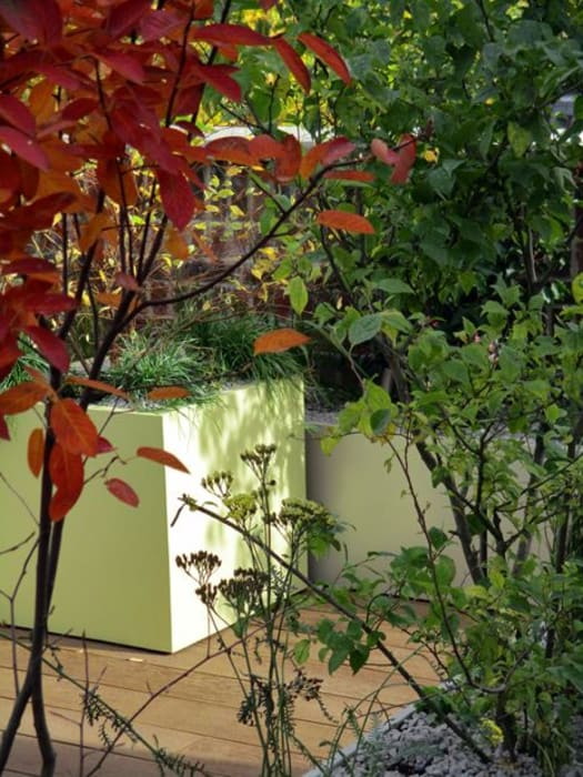 Vivid autumn colours rooftop by MyLandscapes Garden Design Modern