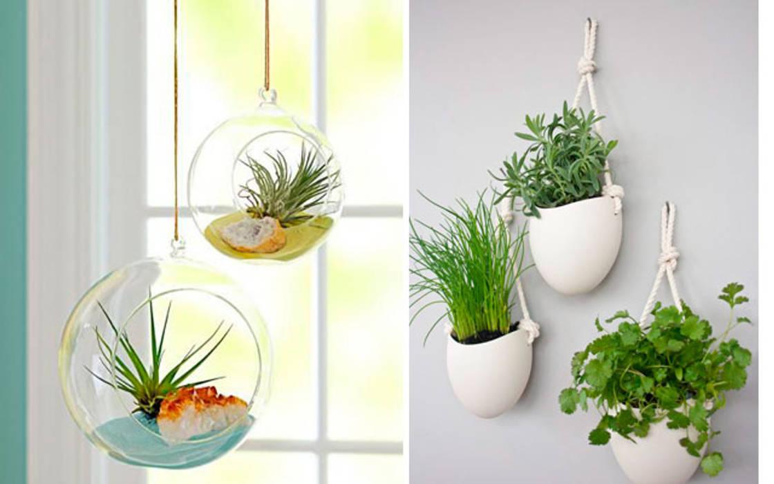 Ideas para decorar con plantas: Paredes de estilo  de Decopot.es