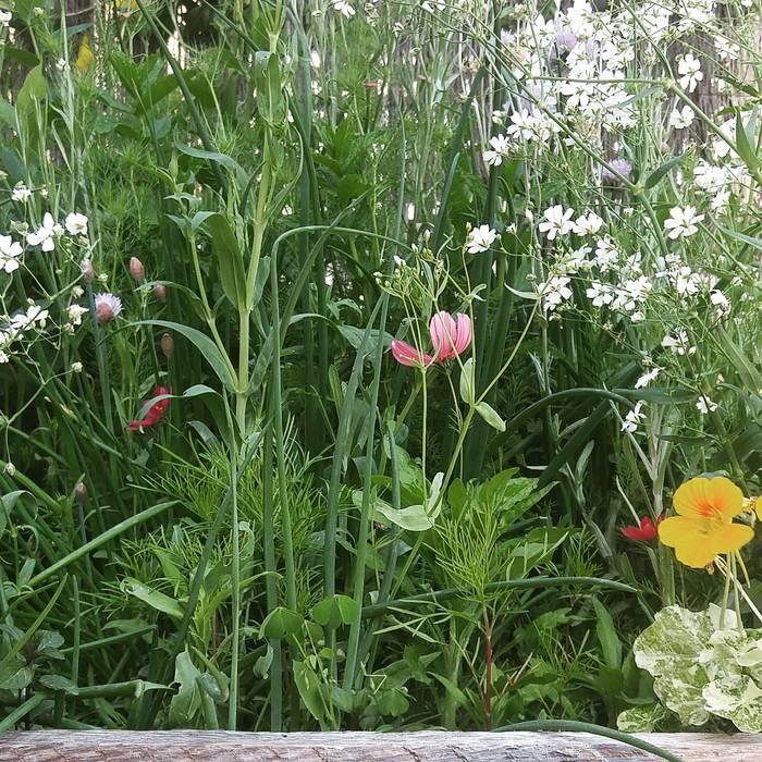 En un sobre de semillas... Jardines de estilo mediterráneo de Marta Puig de la Bellacasa Mediterráneo