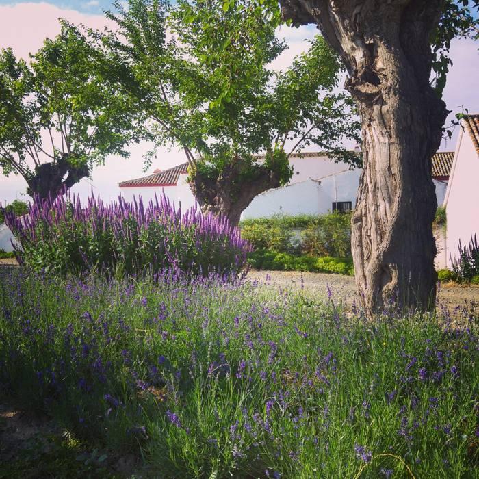 VARIOS Jardines de estilo mediterráneo de Marta Puig de la Bellacasa Mediterráneo