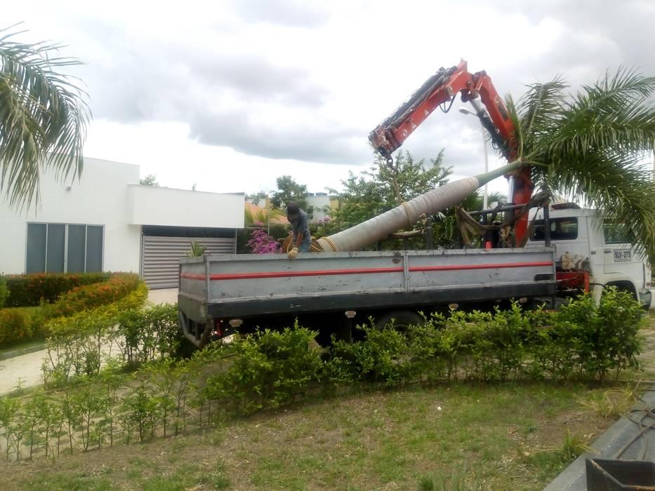 Trasplantes de Palmas Jardines de estilo moderno de Globo Natural Moderno
