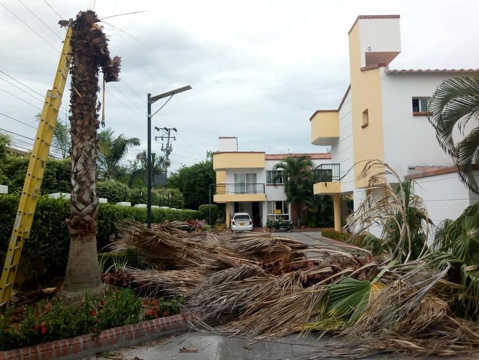 Palma talada: Jardines de invierno de estilo  por Globo Natural