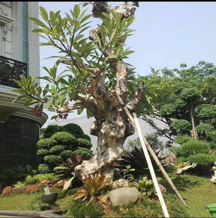 Kontraktor Taman Surabaya Timur Tukang Taman Surabaya - Tianggadha-art Halaman depan Batu Green