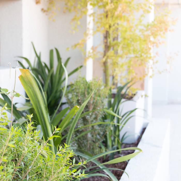 Jardín de sombra Jardines de estilo minimalista de Estudio Amani Minimalista