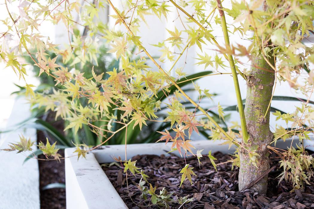 Detalle : Jardines de estilo  por Estudio Amani