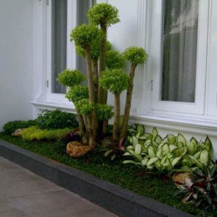by JASA TAMAN Asian Bamboo Green