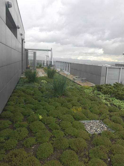 Techos Verdes del Edificio Elemento de Helecho SAS Moderno