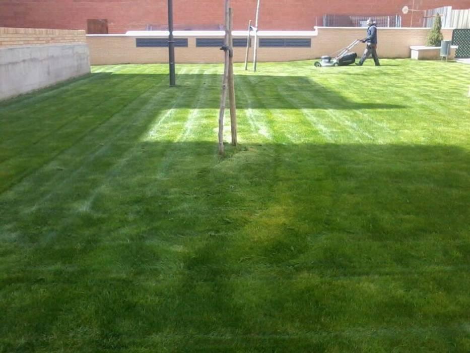 Instalación tepe de cesped: Jardines delanteros de estilo  de VIVEROS CORONADO