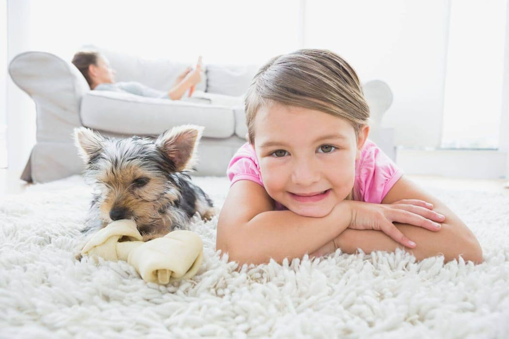 Carpet cleaning Tallahassee:  Living room by Carpet Cleaner Tallahassee, Classic