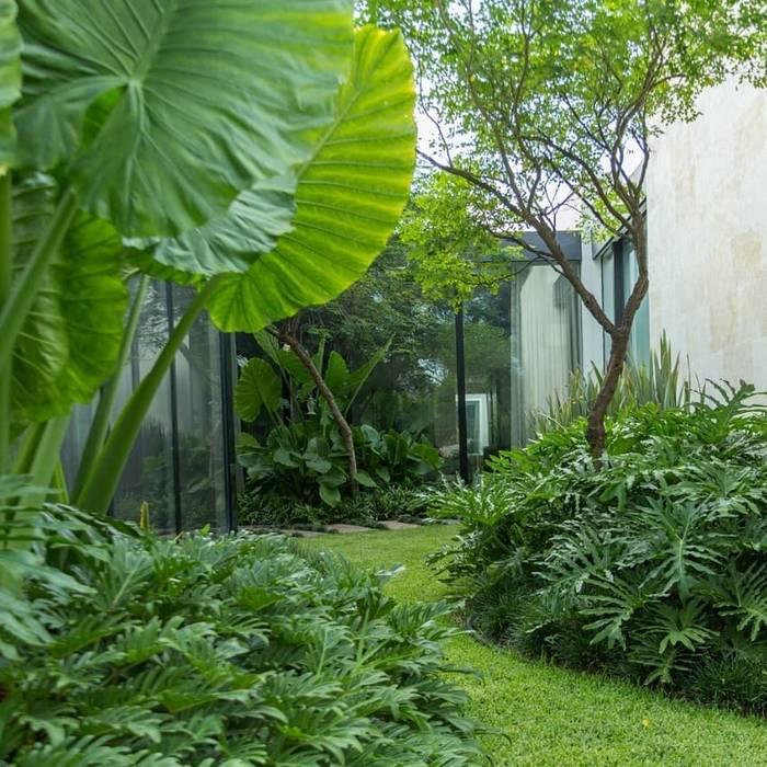 PLANTAS Canelo exteriores Jardines en la fachada Verde