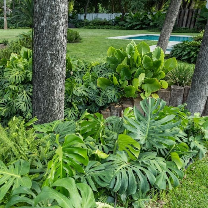 ÁREAS VERDES Canelo exteriores Jardines en la fachada Verde