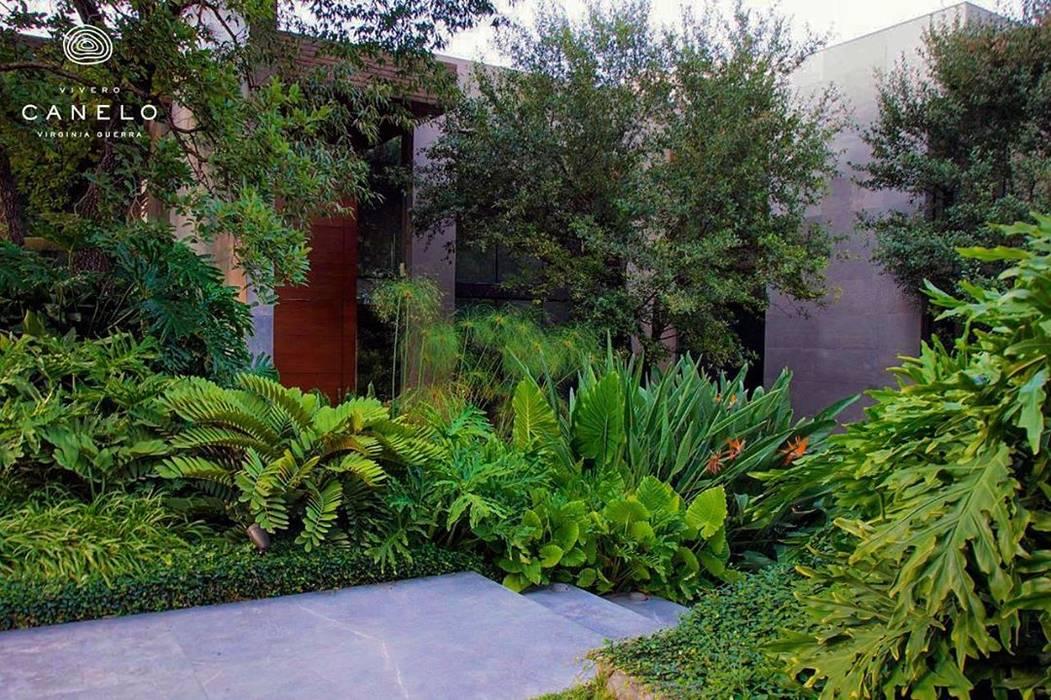 Canelo exteriores Giardino anteriore Verde