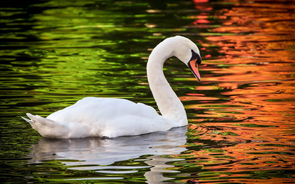 Nature Photography by Photo Vobi