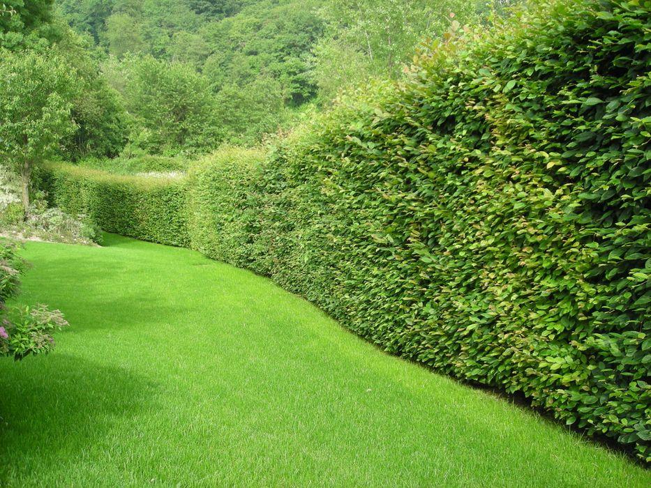 Studio Green Design Modern Bahçe