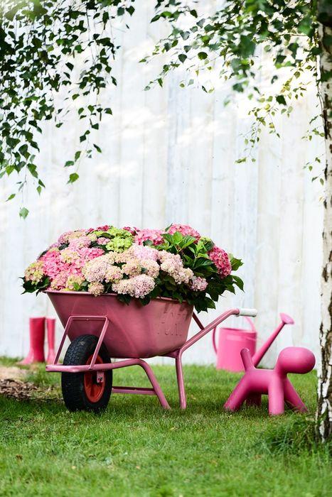 Sommergarten Pflanzenfreude.de GartenPflanzen und Blumen