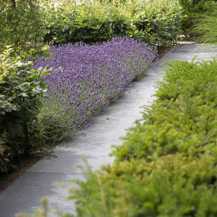Hendriks Hoveniers Jardines de estilo moderno