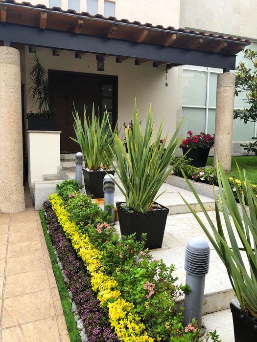 Cattleya jardinería Garden Plants & flowers