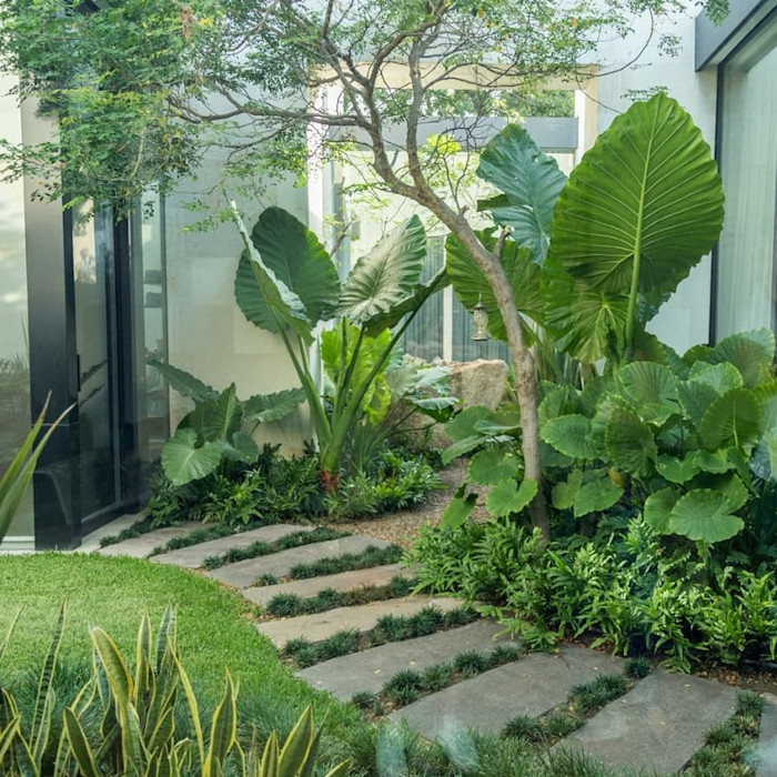 Canelo exteriores Podwórko Zielony