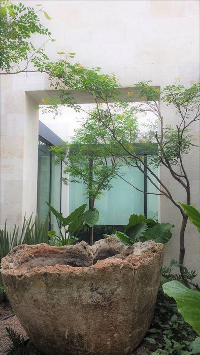 PAISAJISMO Canelo exteriores Jardines en la fachada Verde