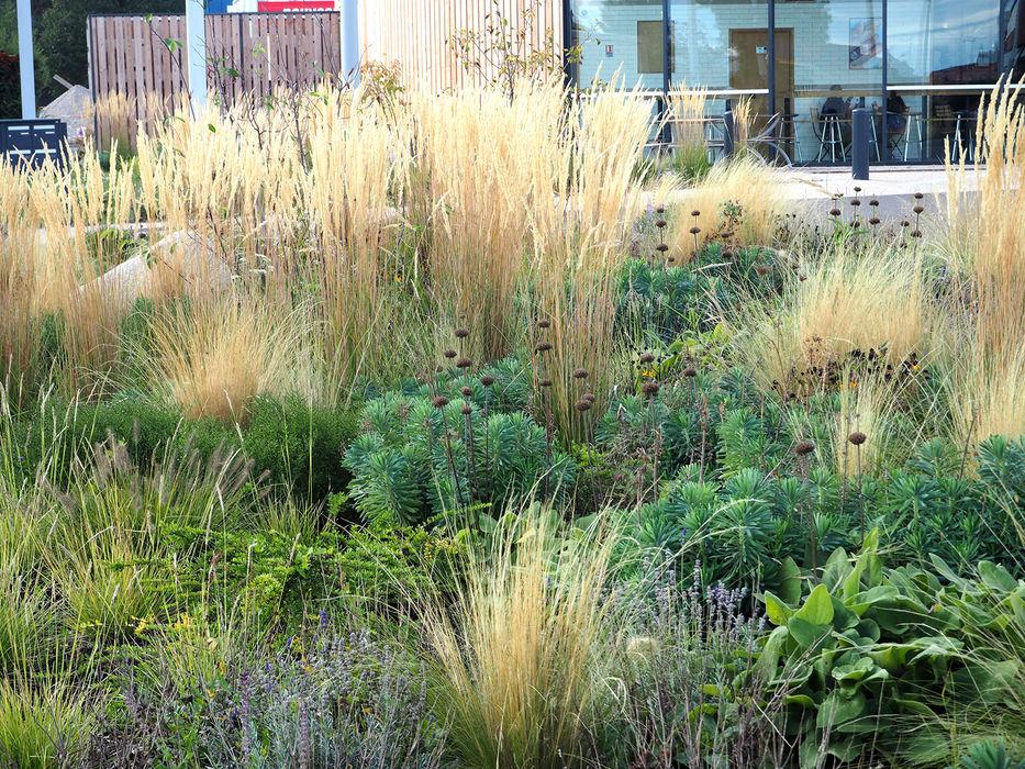 Vegetalisation dela Haut-Rhin 68 SCHAEDELE PAYSAGISTE Jardin avant