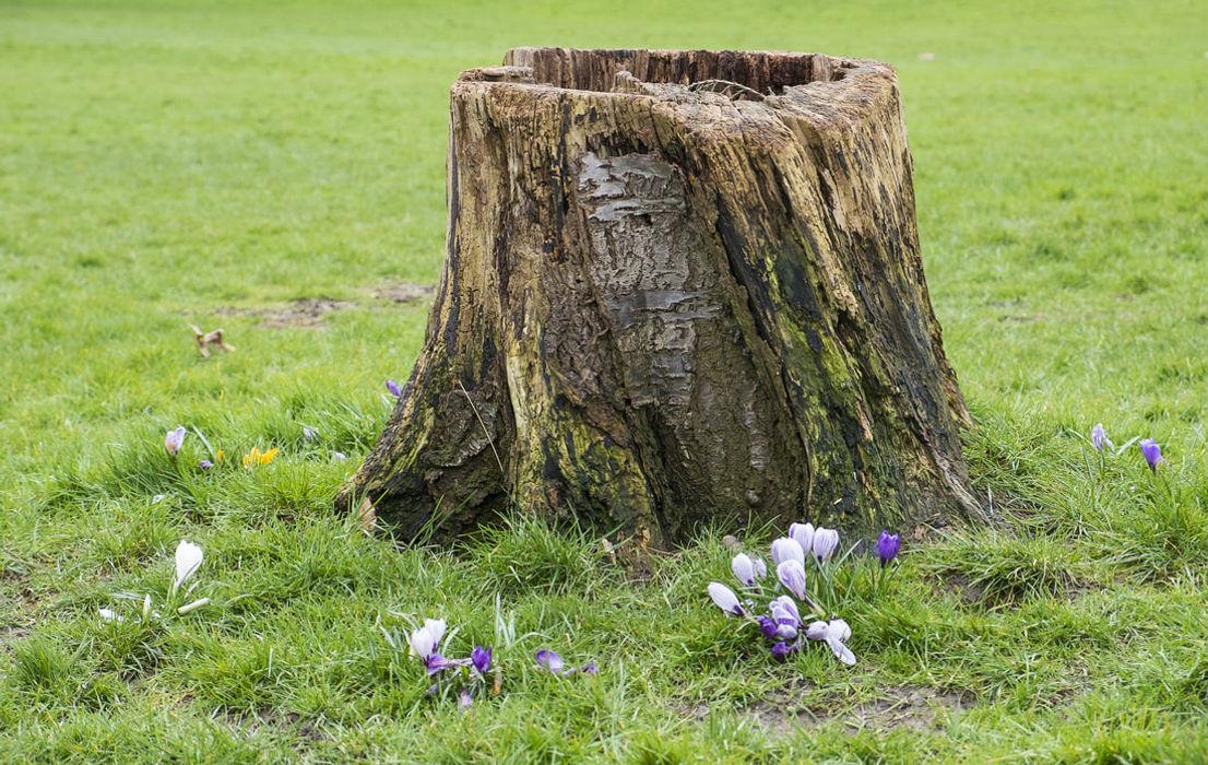 PIC Albby Tree Service