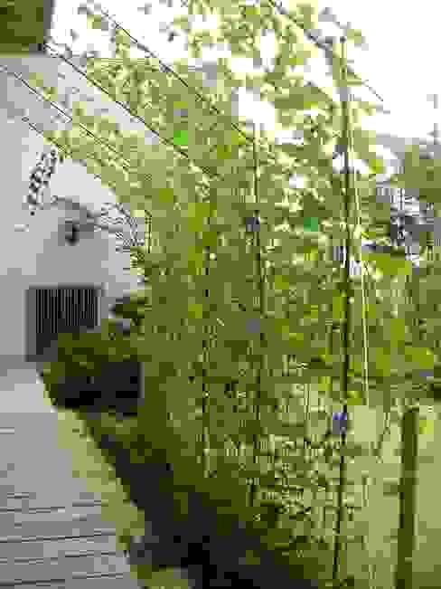 朝顔の日よけカーテン オリジナルな 庭 の ARKSTUDIO一級建築士事務所 オリジナル