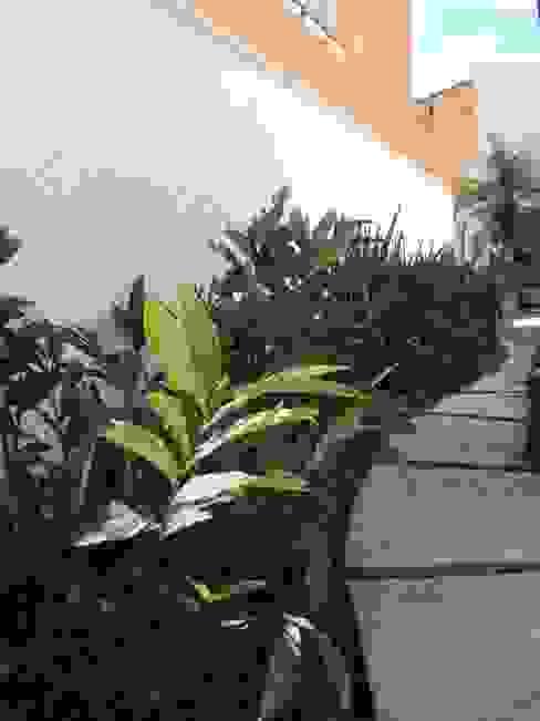 Jardines de estilo  por homify, Tropical