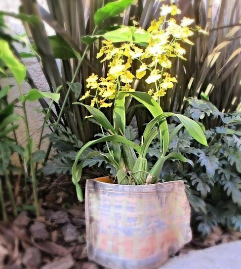 Arranjo com orquideas Jardins tropicais por homify Tropical
