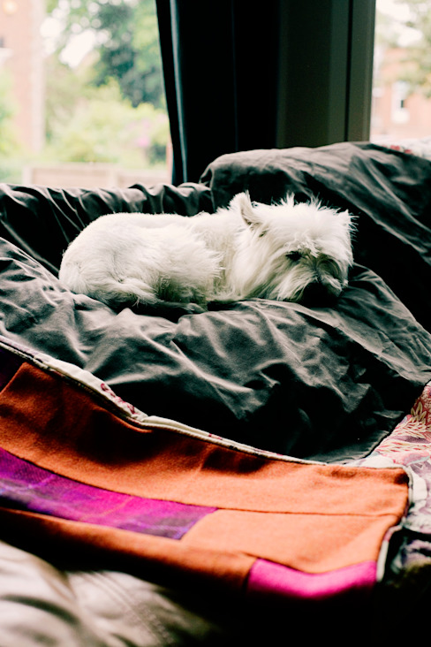 Rosa the dog keeps cosy on a quilt! Quilts by Lisa Watson DormitoriosTextiles