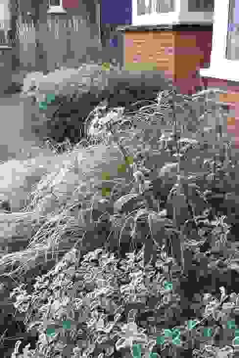 winter interest plants de Fenton Roberts Garden Design Moderno