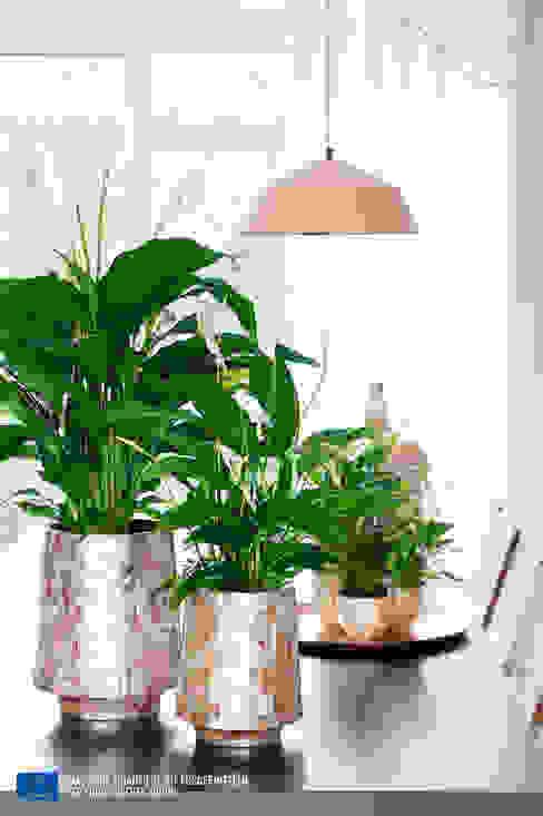 de style  par Pflanzenfreude.de, Moderne