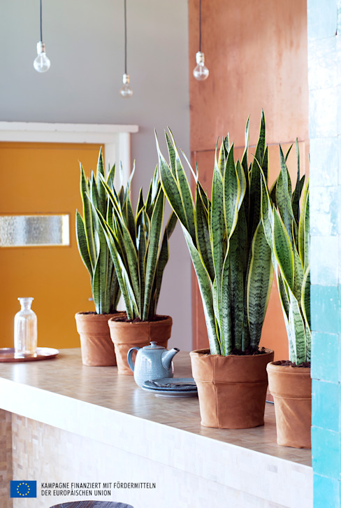 Interior landscaping oleh Pflanzenfreude.de
