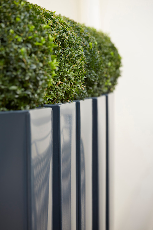 Buxus balls in powder-coated metal planters di FORK Garden Design Moderno
