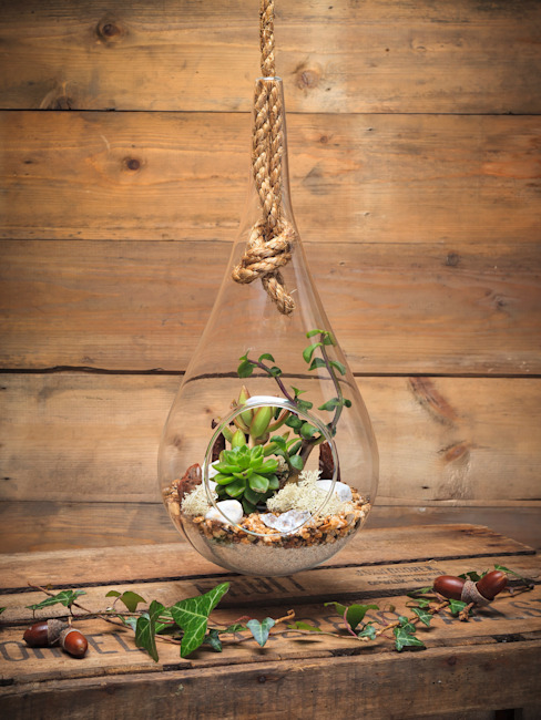 Pacific Teardrop Terrarium por The Urban Botanist Moderno