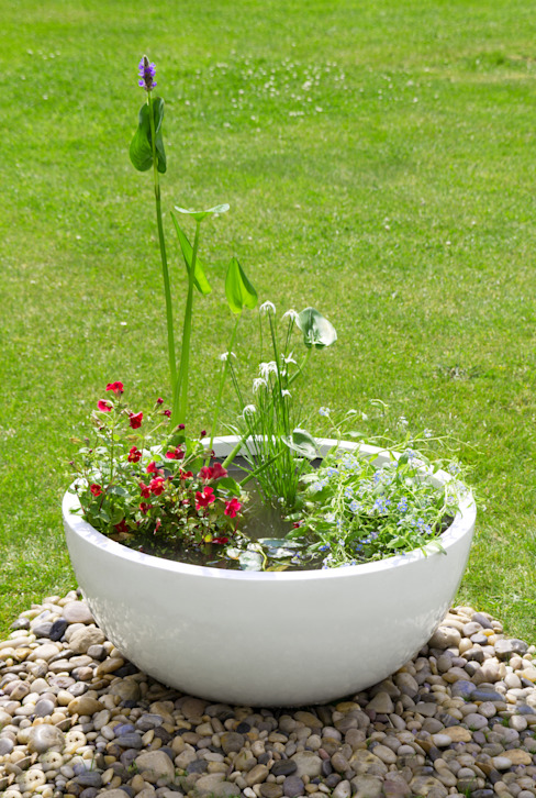 Pond in a Pot Kit with White Fibreglass Planter:  Garden  by Primrose