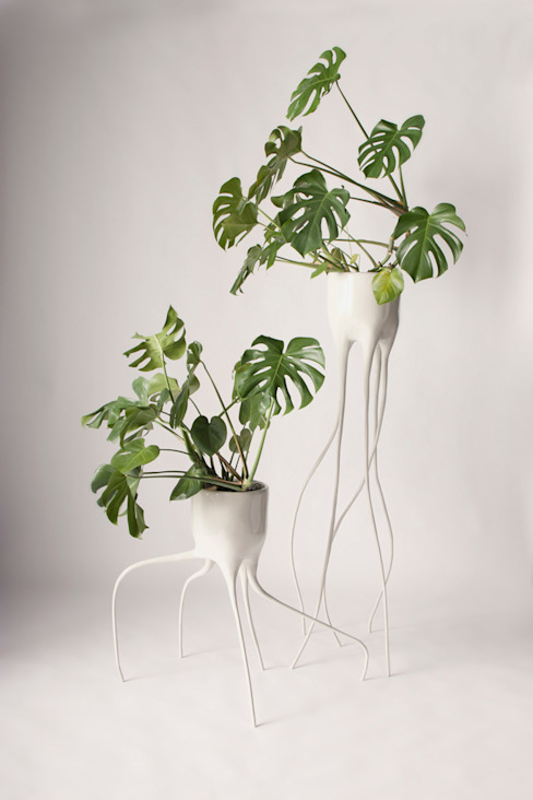 Monstera Magnifica & Monstera Fugiens: modern  door Tim van de Weerd, Modern
