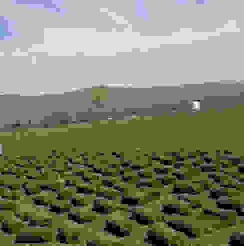 bakış uluslararası çiçekçilik hazır rulo çim üretimi ve peyzaj – RULO ÇİM HASAT:  tarz Bahçe,