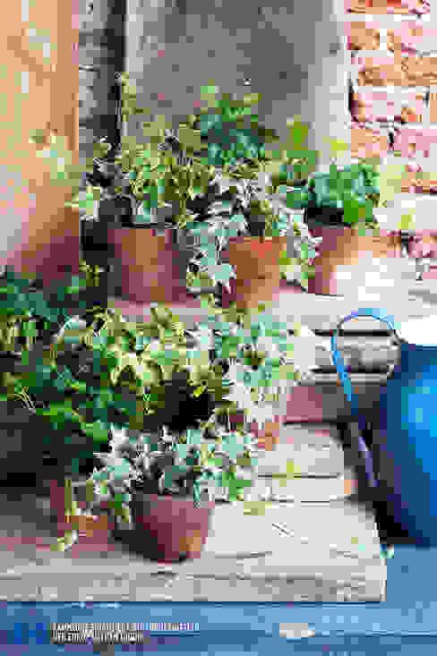 Der Efeu - Zimmerpflanze des Monats April: industriell  von Pflanzenfreude.de,Industrial