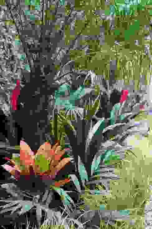 Giardino tropicale di Estudio Nicolas Pierry: Diseño en Arquitectura de Paisajes & Jardines Tropicale