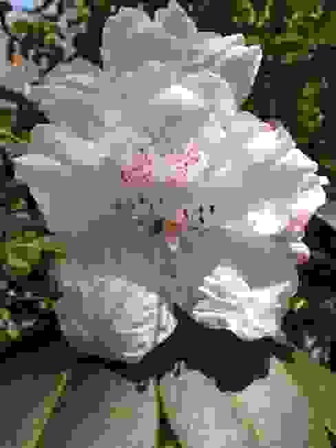 Rhododendron Country style garden by Anne Macfie Garden Design Country
