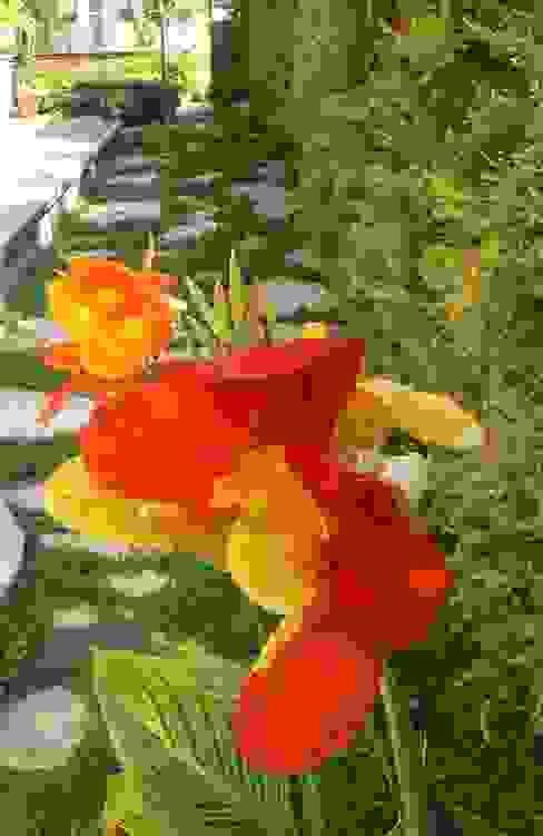 sihirli peyzaj Tropikal Bahçe sihirlipeyzaj Tropikal