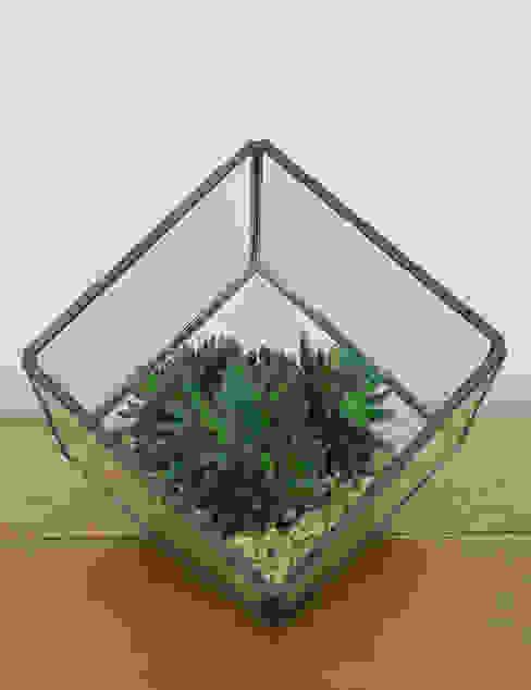 Glass Cube Terrarium par homify Industriel